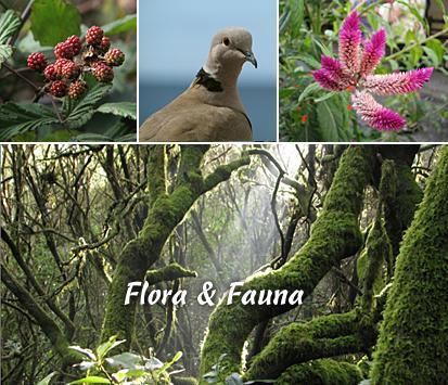 - img_flora_fauna